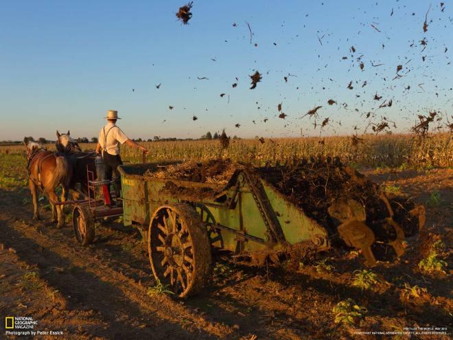 10-amish-farmer-spreads-manure_1600