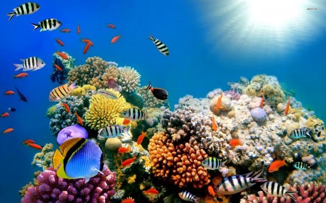 Coral-Reef-Fish-wallpaper-3